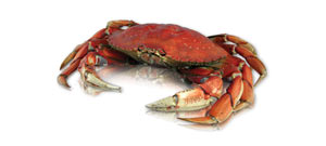 Buy Whole Dungeness Crabs