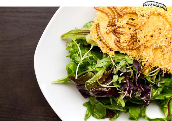 beetle larvae salad