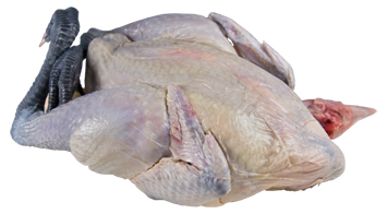 blue-poulet-lg