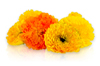 Edible Calendulas for Sale