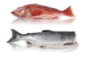 Seafood sustainability mercury content price chart for Fish with least mercury