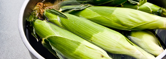 ears of corn soaking