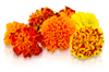 Buy Edible Marigolds