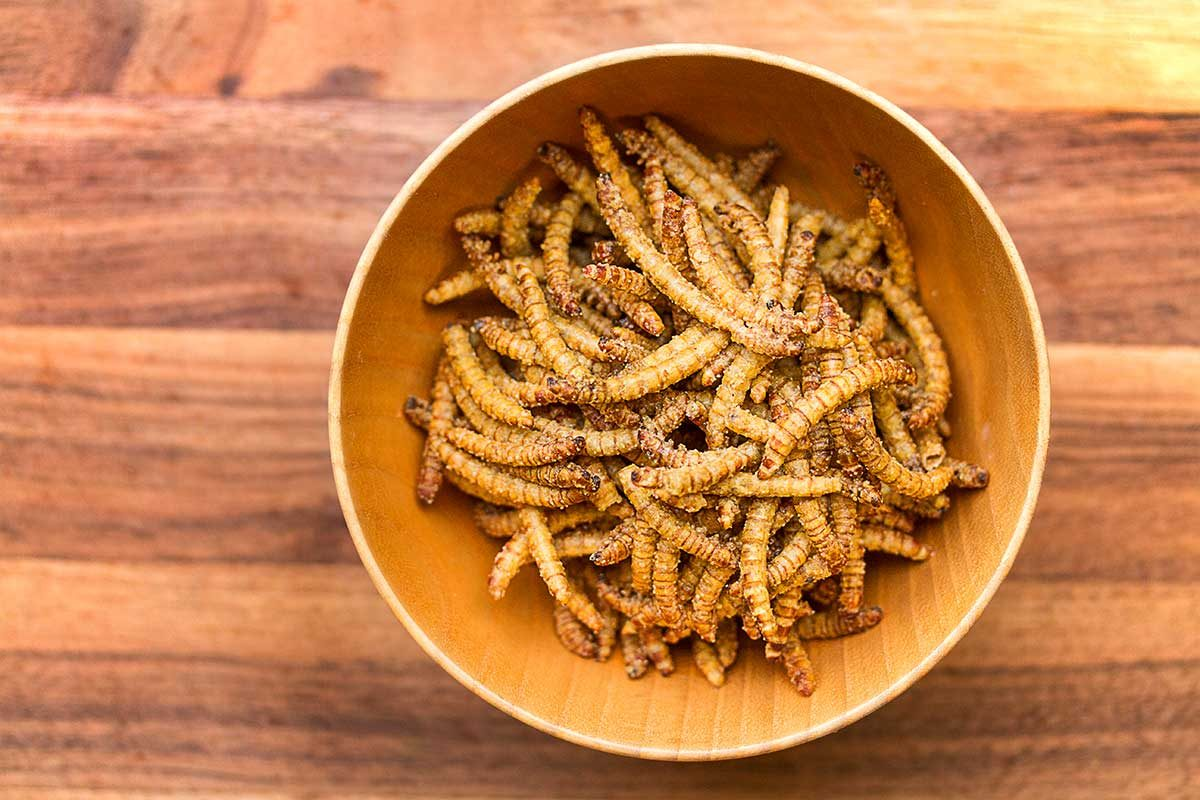 Cumin Spiced Beetle Larvae Snacks
