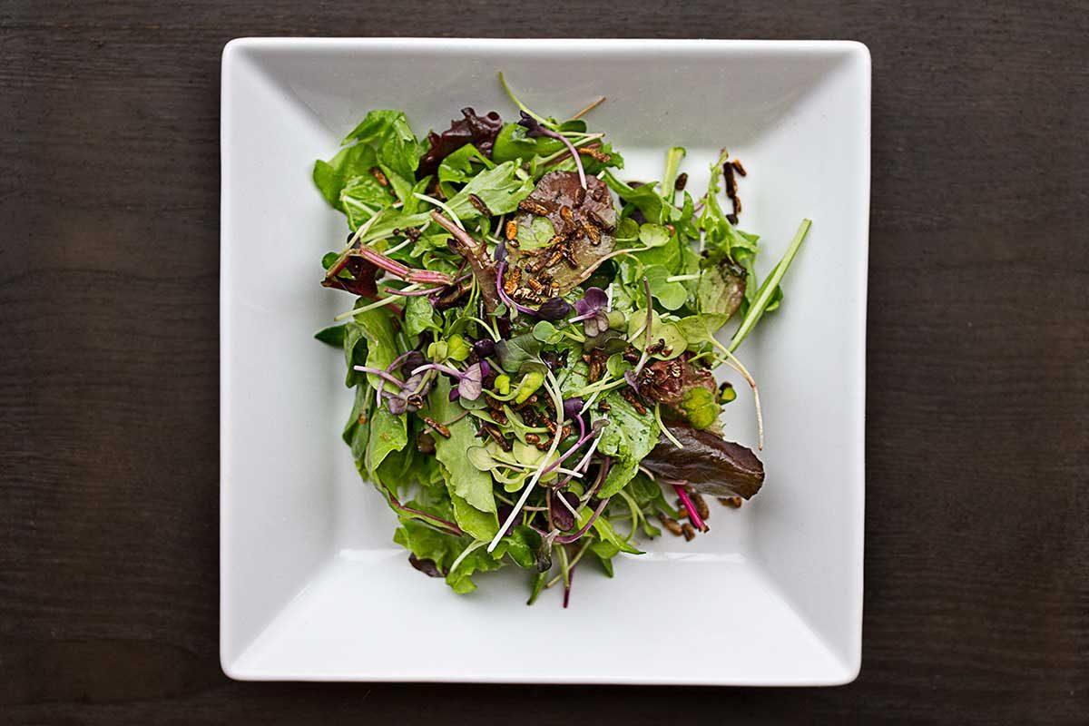 Termite Salad