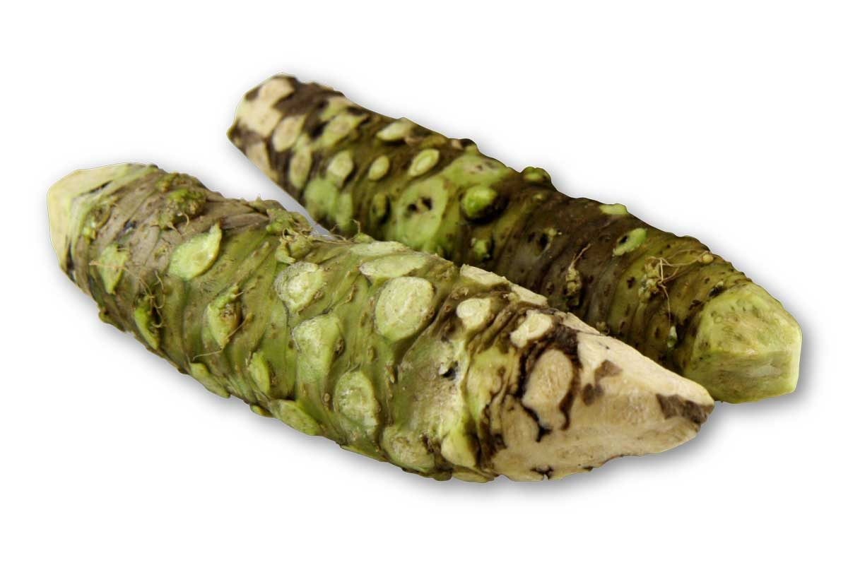 fresh wasabi root