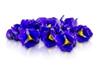 Micro Blue Sapphires