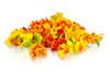 Micro Marigolds