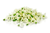 Micro Pepper Flower White