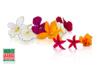 Edible Microflowers Blend