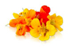 Edible Nasturtium Blossoms