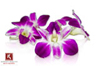 Edible Orchids for Sale