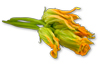 Squash Blossom Recipes