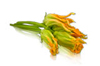 Squash Blossoms Online
